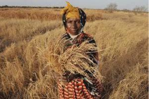 FAO: Le nombre de personnes souffrant de la faim passe sous la barre des 800 millions. Prochain objectif: l'éradication