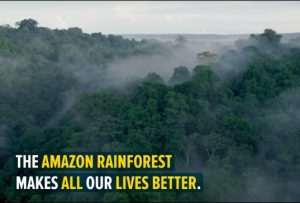World's Largest Tropical Reforestation to Plant 73 Million Trees in Brazilian Amazon
