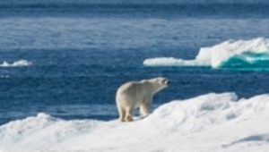 Greenpeace: Great news for the Arctic AND the Antarctic!