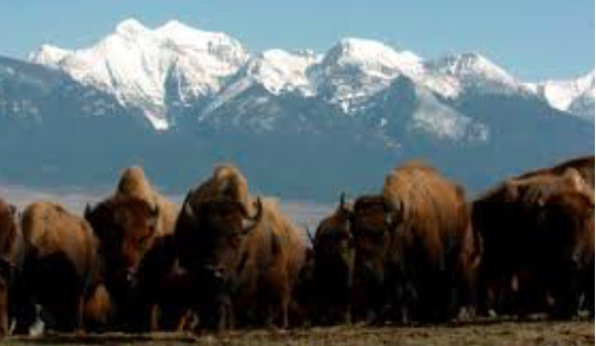 United States: Flathead Indian Reservation Expanded to Include National Bison Range